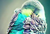 Wildlife Animals / Wild animals living in open ground and enjoying life