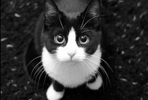 Black and White / by Joyous