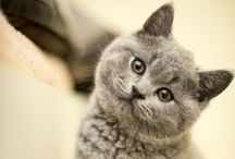 Cats / I would be the crazy cat lady, if I was allowed to have a pet. / by Anna Stutzman
