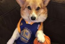 #DubNation PETS / No shortage of cuteness in #DubNation.  Does your pet represent the Warriors? Share your photos using #WarriorsGround!