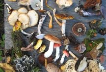 Mushrooms / Know what you're picking and eating. I am not responsible for your stupidity if you eat the wrong mushroom.  / by Stephanie Bost-Rana
