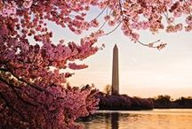 D.C. I'm Coming for Ya / by Juliette Macphail