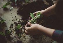 Gardening / by Asharae Kroll