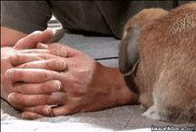 Bunny Videos