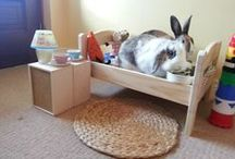 Rabbit Housing / Ideas for creating indoor & outdoor rabbit habitat spaces and having things for the rabbits to play with in those spaces to enjoy since a bored bunny is a destructive one.