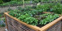 Gardening, plants, indoor plants, tree houses