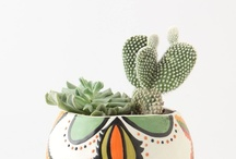 plants / by Victoria Mesenbrink