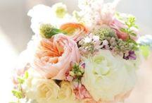 flower bud / flowers
