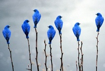 I'm So Blue / by Susan Motley