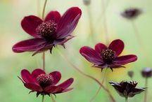 Garden / Garden art. Ideas for growing.  Plants. Perennials.