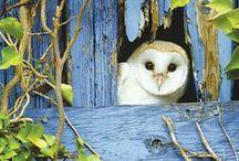 Owls / by Miranda Hayden