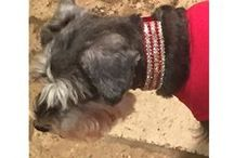Happy Customers / Dog Collar Fancy - Blinging out your pets since 2006. http://www.dogcollarfancy.com