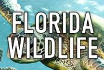 FLORIDA WILDLIFE / Florida is a majestic warm and tropical oasis that is full of magnificent wildlife. This board is designed to showcase images of all the fantastic wildlife Florida has to offer! THIS IS A SPAM-FREE ZONE! PLEASE STAY ON CONTENT AND BE COURTEOUS. IF YOU WOULD LIKE TO JOIN THIS BOARD, PLEASE LEAVE A COMMENT ON A PIN. #waterfrontproperties #florida #wildlife http://waterfrontpropertiesblog.com