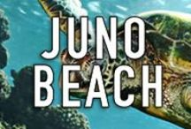 JUNO BEACH / Juno Beach is a pristine and perfectly located warm and tropical South Florida town that is a truly wonderful place to live, work, and play. This board is designed to showcase everything it has to offer. THIS IS A SPAM-FREE ZONE! PLEASE STAY ON CONTENT AND BE COURTEOUS. IF YOU WOULD LIKE TO JOIN THIS BOARD, PLEASE LEAVE A COMMENT ON A PIN.  #JunoBeach http://www.waterfront-properties.com/junobeachrealestate.php
