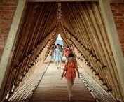 Bambu | Bamboo