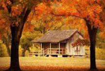 Fall Ideas and Autumn Inspiration / Autumn, Fall