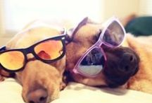 Animals need shades too! / Funny Animal pictures from cats to owls in sunglasses!