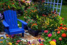 Flowers / by Janette Mathews