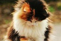 Meow & Roar / feline purrfection