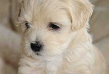 Puppies Only / I love puppies! This is a board of the cutest puppies on Pinterest.