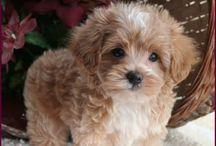 Pupppppy-esque