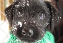 Animals :) / cute, cute, and more cutenesss