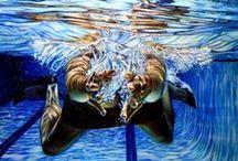 Swim & Dive / by Hayden Bentley