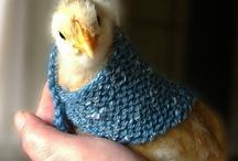 Animals in Knitwear