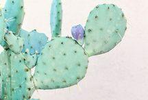 cactus / succulents plants cactus