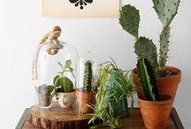 Plants & Gardens / by Kelly Zarb