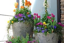 "Container Gardening / ""Study nature, love nature, stay close to nature,  It will never fail you."" - Frank Lloyd Wright"