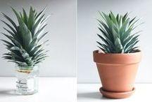 Indoor Gardening / Indoor gardening inspiration.