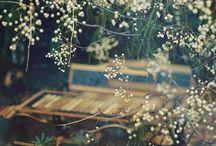 gardens / Oh garden, wonderful garden! / by Gemma Koo