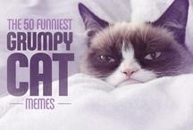 Funny :) / by Senior Pictures Aspen Studio