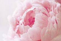 Flowers / Les fleurs est belle.  / by Lauren Rauffer