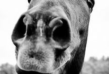 all things horse related