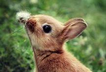 Beyond Cute!