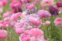 Garden Love / by Cynthia Vasquez