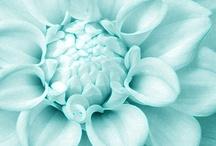 Turquoise Love!!!