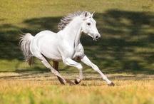 Caballitos / Horse y más horse. De todas las razas, colores y edades. Me encantan los caballos :) / by Reshi M. G.