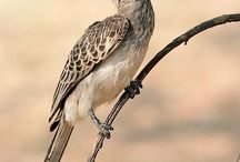 Bird spotting in Southern Africa / Birds