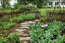 My Garden / by Grace Warren