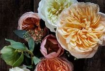 flora / organic. vintage. romance. / by Taylor Romanowski