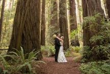 Weddings on the Redwood Coast / by Humboldt County Convention & Visitors Bureau