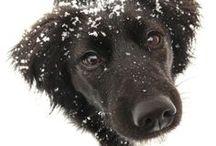 Dogs & Alles rund um den Hund