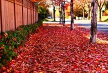 Otoño / Los colores y sabores de un día de Otoño #autumn / by lorlof