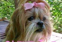 Clementine / I am a Shih Tzu. That is enough.