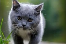 Gorgeous Cats / Funny and adorable pictures of cats to share and pin with your friends.