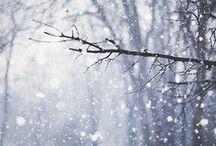WinterTRACES / by frau heuberg