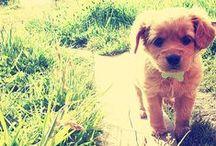 F U R R Y / Cutest animal friends / by Wonder Forest